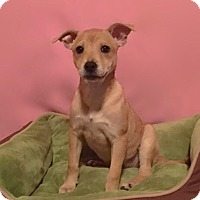 Adopt A Pet :: Rue - Atlanta, GA