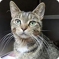 Adopt A Pet :: Juliana - Wheaton, IL