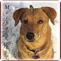 Adopt A Pet :: Mocha(Riley) - Marlborough, MA