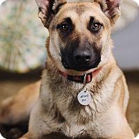 Adopt A Pet :: Cleopatra - Portland, OR