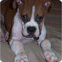 Adopt A Pet :: Pearl - Okatie, SC