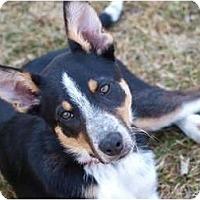 Adopt A Pet :: Sparkle - Toronto/Etobicoke/GTA, ON