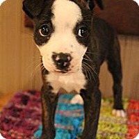Adopt A Pet :: Skye - Wytheville, VA