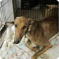 Adopt A Pet :: Woody (Boc's Wood Hog) - Chagrin Falls, OH