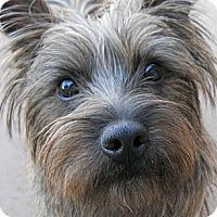 Adopt A Pet :: Spike - dewey, AZ
