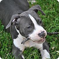Adopt A Pet :: Mason - Vernon Hills, IL