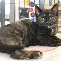 Adopt A Pet :: Brandi - Hamilton, ON