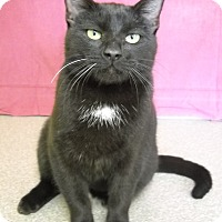 Adopt A Pet :: Onyx - Larned, KS