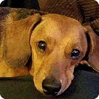 Adopt A Pet :: Rudy - Andalusia, PA