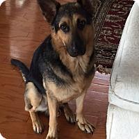 Adopt A Pet :: Drogo - Dripping Springs, TX