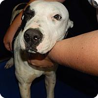 Adopt A Pet :: Joker - Henderson, NC