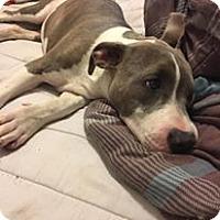 Adopt A Pet :: Spooky - Manteca, CA