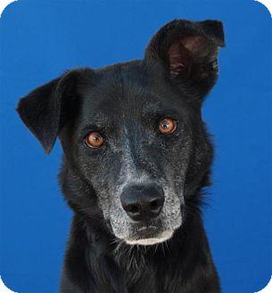Border Collie Mix Dog for adoption in Pagosa Springs, Colorado - Ethel
