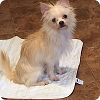 Adopt A Pet :: AJ - Bernardston, MA