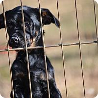 Adopt A Pet :: Wispa - Pikeville, MD
