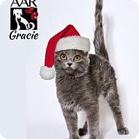 Adopt A Pet :: Gracie - Tomball, TX