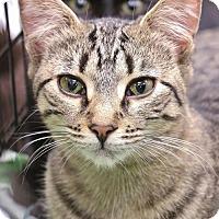 Adopt A Pet :: Gretel - Grand Blanc, MI