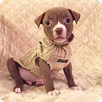 Adopt A Pet :: Finn - santa monica, CA