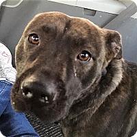 Adopt A Pet :: Maryann - Bruce Township, MI