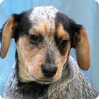 Adopt A Pet :: Tyler - Maynardville, TN