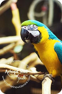 Macaw for adoption in Mantua, Ohio - KIWI