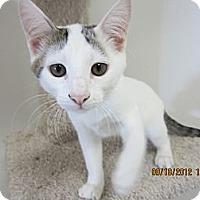 Adopt A Pet :: Snow Ball - Bunnell, FL