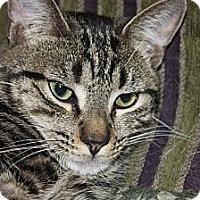 Adopt A Pet :: Grover (LE) - Little Falls, NJ