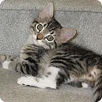 Adopt A Pet :: Amelia - North Highlands, CA