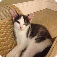 Adopt A Pet :: Elliot - Island Park, NY