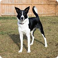 Adopt A Pet :: Rio - Saskatoon, SK
