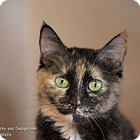 Adopt A Pet :: Joy - Fountain Hills, AZ