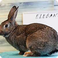 Adopt A Pet :: Elegantna - Los Angeles, CA