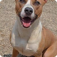 Adopt A Pet :: Trixie - Toledo, OH