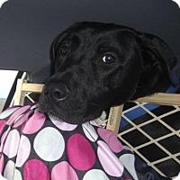 Adopt A Pet :: Jackson - Hixson, TN