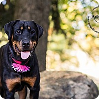Adopt A Pet :: Lucy - Frederick, PA