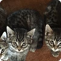 Adopt A Pet :: Sarah - Encinitas, CA