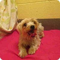 Adopt A Pet :: Egypt - Rockville, MD