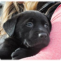 Adopt A Pet :: Oxford - Broomfield, CO