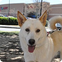 Adopt A Pet :: LUCA - Powder Springs, GA