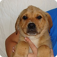 Adopt A Pet :: Chewy - Oviedo, FL