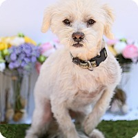 Adopt A Pet :: Buddy - Auburn, CA