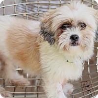 Adopt A Pet :: Imelda - Woonsocket, RI