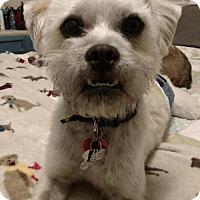 Adopt A Pet :: Chapman - Grand Rapids, MI