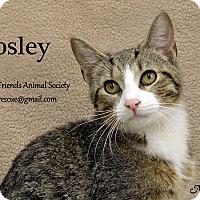 Adopt A Pet :: Bosley - Ortonville, MI