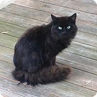 Adopt A Pet :: Iggy - Colmar, PA