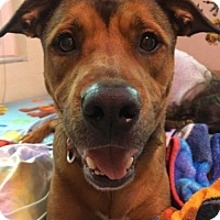 Adopt A Pet :: Mickey - Fort Lauderdale, FL