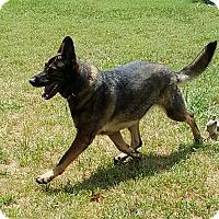 Adopt A Pet :: Cassie - Mocksville, NC