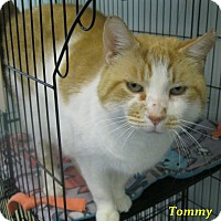 Adopt A Pet :: Tommy - Chisholm, MN