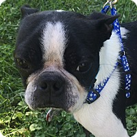 Adopt A Pet :: Kirby - Nashville, TN
