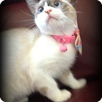 Adopt A Pet :: Aisha - San Ysidro, CA